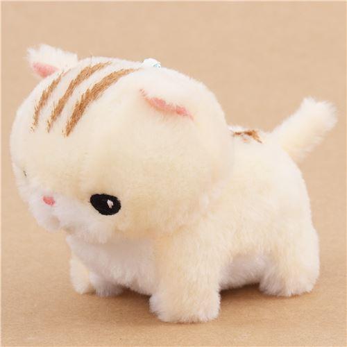 short haired kittens