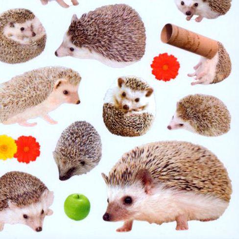 Kawaii Hedgehog Apple Flower Stickers By Mind Wave